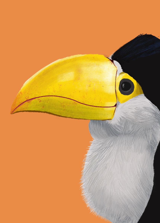 Ilustración tucán